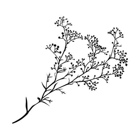 Branch of beautiful hand-drawn silhouette gypsophila in black and white colors. Vector illustration