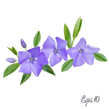bush mesh: Branch of blue forget-me-not flowers isolated on white background close up. Photo-realistic mesh vector illustration. Illustration