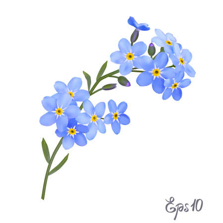 Branch of blue forget-me-not flowers isolated on white background close up. Photo-realistic mesh vector illustration. Stock Illustratie