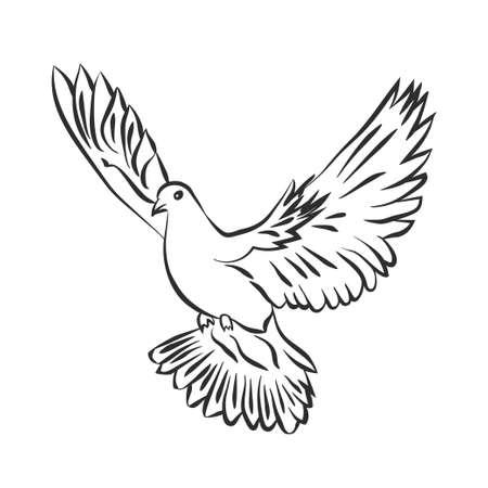 비행 벡터 스케치를 비둘기. 평화의 비둘기. SVector 일러스트 스톡 콘텐츠 - 74300007