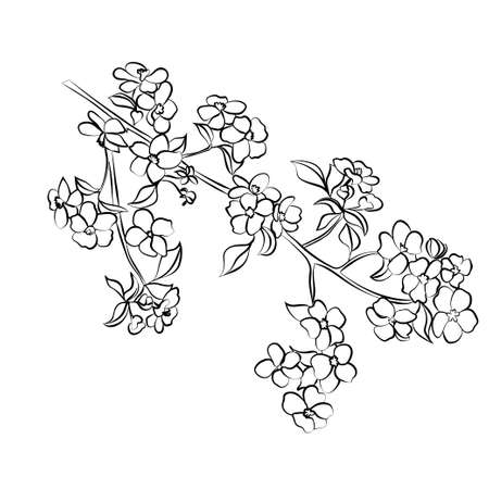 appletree: twig apple-tree blossoms. Vector illustration. Black outline