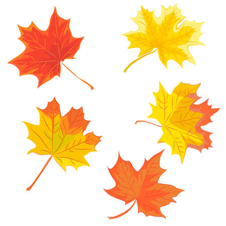 Set of colorful maple leaves. Vector illustration