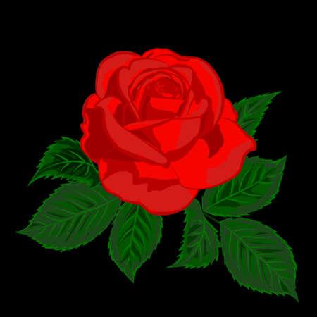 Red rose on black background.. Vector illustration