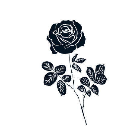 silhouette of rose isolated on white background. Vector illustration.