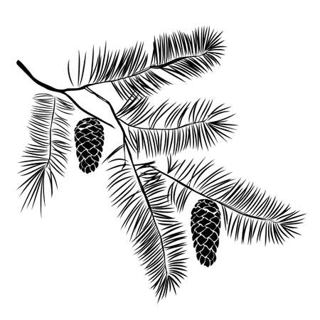 Hand drawn pine tree branch isolated on white background. Ink illustration in vintage engraved style.