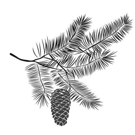 De hand getrokken tak van de pijnboomboom die op witte achtergrond wordt geïsoleerd. Inktillustratie in vintage gegraveerde stijl.
