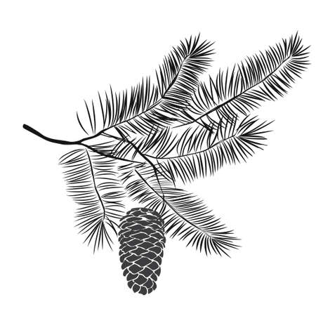 Hand drawn pine tree branch isolated on white background. Ink illustration in vintage engraved style. Reklamní fotografie - 88362568