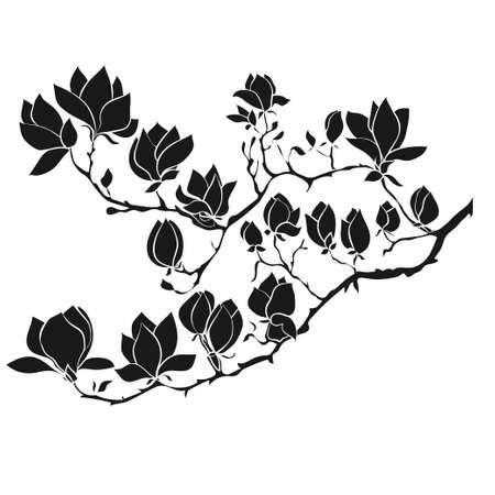 開花枝のマグノリア ホワイト バック グラウンドに。手描きのベクトル図、スケッチ。デザインの要素。 写真素材