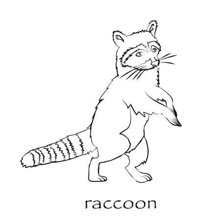 Cute cartoon raccoon isolated Illustration