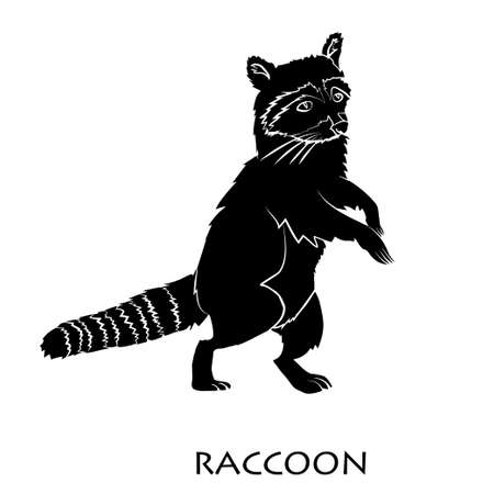 Cute cartoon raccoon isolated Illustration