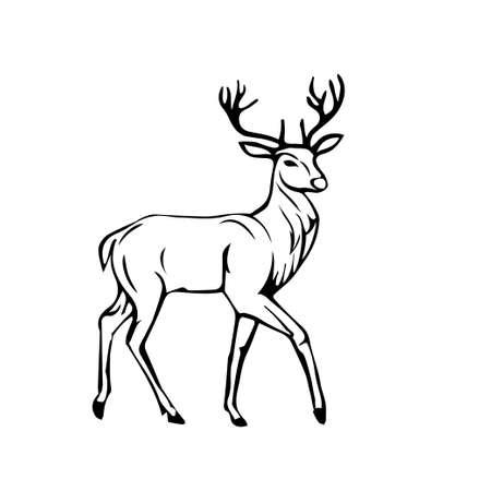 sketch of Beautiful noble proud deer .