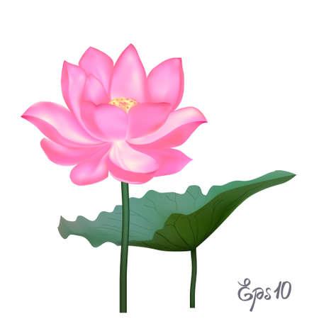 Beautiful realistic illustration of lotus 向量圖像