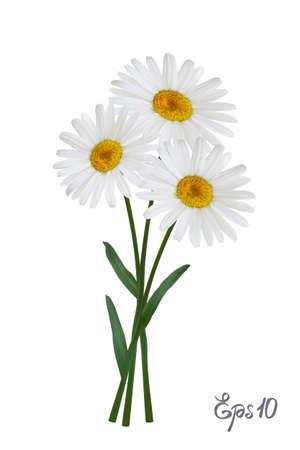 Gänseblümchen-Blume isoliert auf weiß Illustration