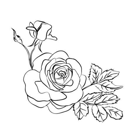 Rose sketch on white background Vettoriali