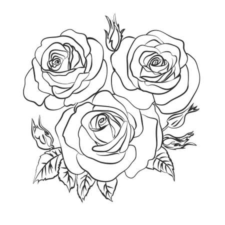 Rose sketch on white background Vettoriali