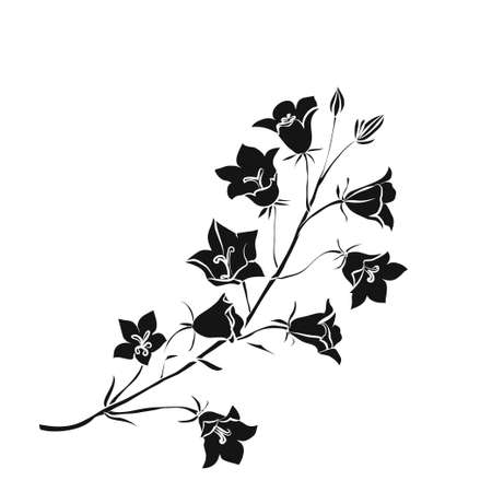 Silhouette Campanula . Black outline on white background. Vector illustration.