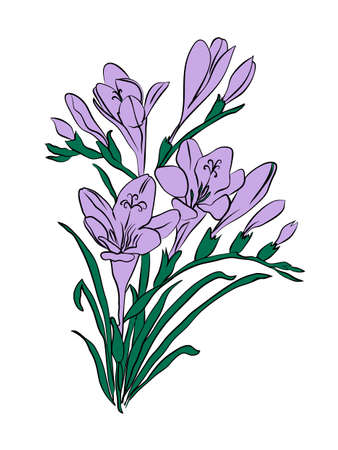 Freesia card illustration, one element composition with simple frame over white Vectores