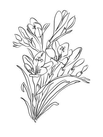 Freesia flower graphic black white isolated sketch Vectores