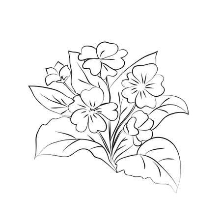 Primrose illustration on white background. Vector illustration Ilustração