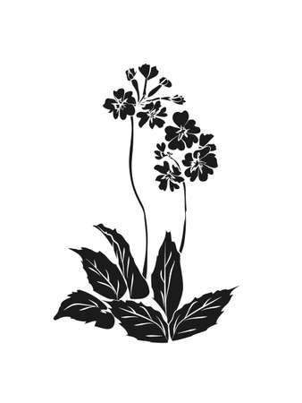Primrose illustration on white background. Black silhouette of primula on white background. Vector illustration
