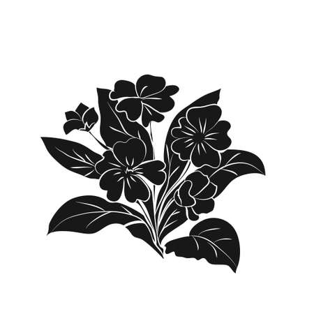 Primrose illustration on white background. Black silhouette of primula on white background. Vector illustration