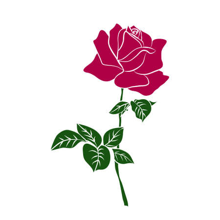 silhouettes of red rose isolated on white background. Vector illustration. Illustration