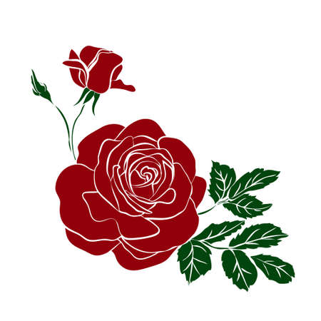 bouquet of red roses isolated on white background. Vector illustration.