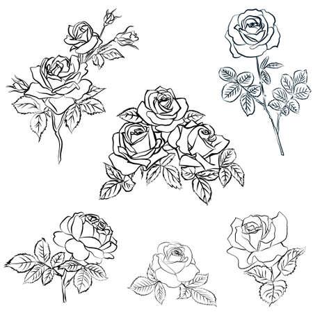 Establecer boceto de Rose. Ilustración de vector