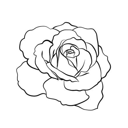 Rose sketch on white background vector illustration Stok Fotoğraf