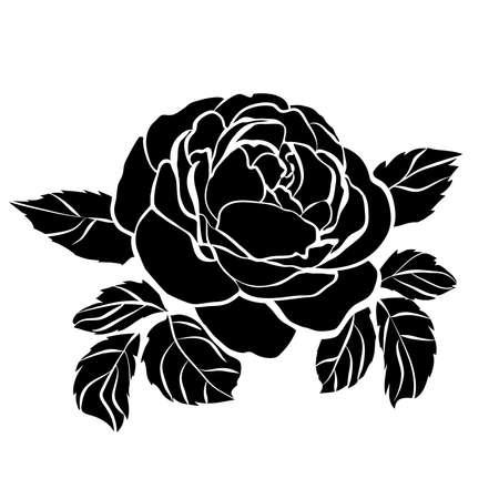 rose DSC_0583_0561