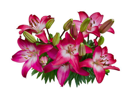 Lily varieties flowers Reklamní fotografie