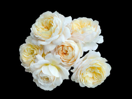 beautiful bouquet of yellow roses isolated on a black background.