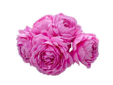 Pink rose flowers arrangement isolated on white background