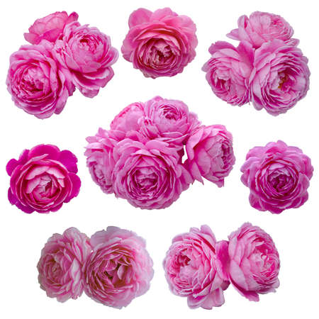 collage of delicate pink roses