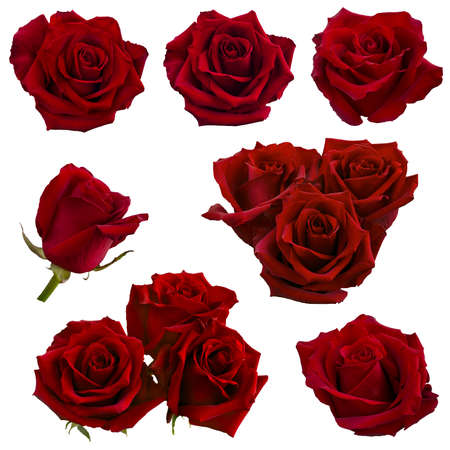 collage of red roses isolated on white background Archivio Fotografico