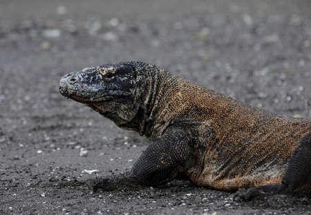 komodo island: Komodo island national park in Indonesia live dragon