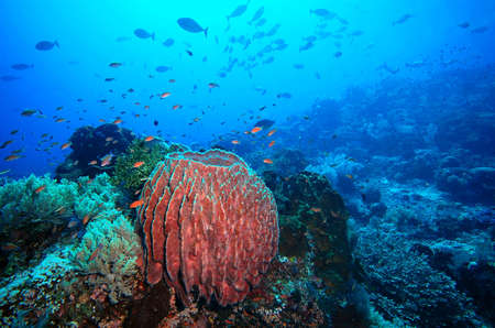 komodo island: Coral reef, fish and diving Indian ocean and Komodo Islands