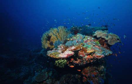 komodo island: Coral reef, fish and diving in indian ocean