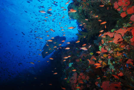 Coral reef fish and Napoleon in sea on Komodo islands photo