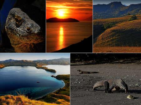 komodo island: Komodo island national park in Indonesia live dragon collage Stock Photo