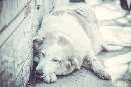 solter�a: Abandoned homeless stray dog sleeping on the street