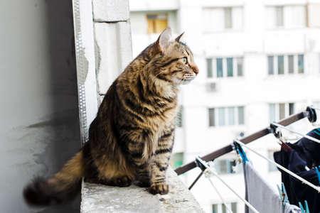adentro y afuera: retrato de un gato triste en la ventana mirando a la distancia