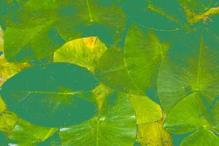 image of marsh leaves toned background photo