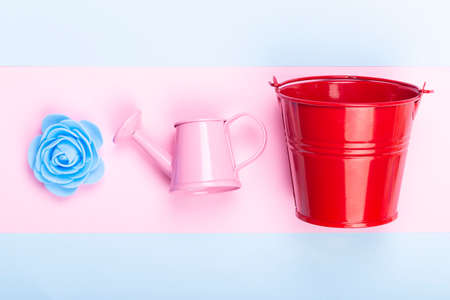 Blue decorative rose near to a red bucket and a pink watering can, picture on a colorful pastel background, concept gardening items