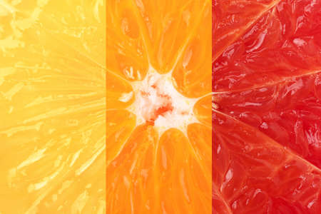 Gradient from red to yellow color citrus cut macro stripe collage collection. Grapefruit, orange and lemon fruits closeup