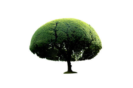 green round garden tree isolated on white background 写真素材