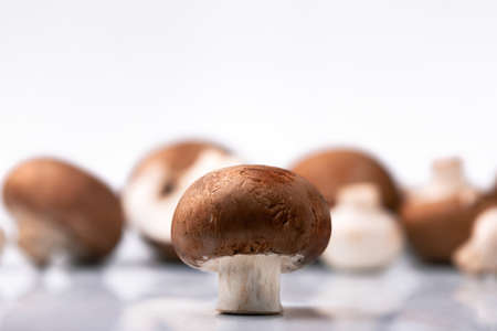 brown mushroom fresh, appetizing champignon on a background of blurry mushrooms