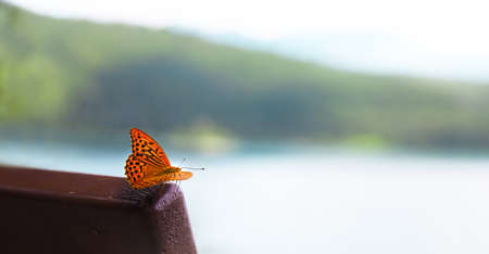 Beautiful colorful monarch butterfly against the background of a blurred landscape, the  concept of the onset of spring Zdjęcie Seryjne