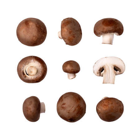 Collection of fresh champignon brown mushrooms, isolated on white background