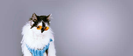 funny cat in knitted winter sweater and glasses on gray background, panoramic image with space for text